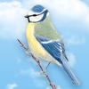 lisettedm - éleveur d'oiseau Birdrama