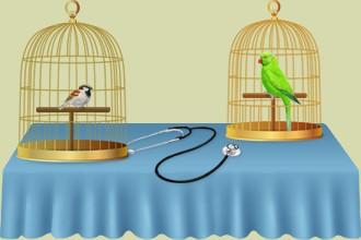 Occupez-vous des oiseaux dans votre salon de soin ou dans votre clinique vétérinaire, faites-les progresser continuellement grâce aux autres éleveur d'oiseaux dans votre parc ornithologique...