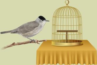 Les oiseaux à l'abandon