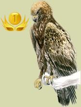 Classement des éleveur d'oiseaux par jours de présence